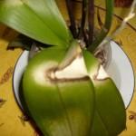 Orchidee Kopen