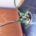 Orchidee Soorten