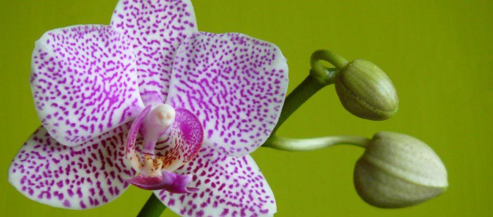 prachtige orchidee planten